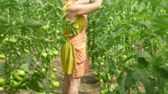 Stock Video Footage of Female farmer working in tomato greenhouse