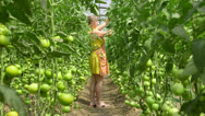 Stock Video Footage of Grower of greenhouse tomatoes