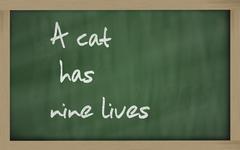"""""""  a cat has nine lives """" written on a blackboard - stock photo"""