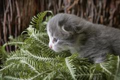 A kitten prowling through a bunch of plant leaves - stock photo