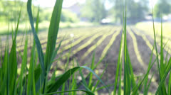 Field Growing Vegetables with sun shining Stock Footage