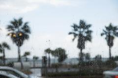 Palmuja nähnyt läpi sateen katettu ikkunan Kuvituskuvat