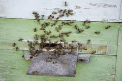 A bee hive Stock Photos