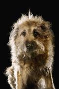 Mixed-Breed dog, portrait Stock Photos