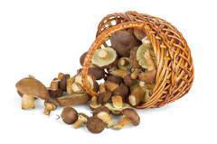 Basket and cepe mushrooms Stock Photos