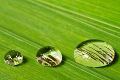 three droplets on leaf background - stock photo