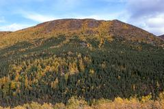 Fall colors in alaska Stock Photos