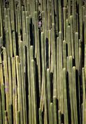 Cacti Stock Photos