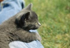 A kitten, close-up, Asessipi Parkland, Manitoba, Canada - stock photo