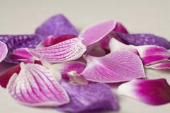 Petals from a Moth Orchid (Phalaenopsis) Stock Photos