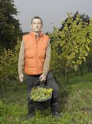 Stock Photo of A vintner posing with a bucket of grapes