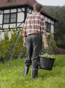 A vintner carrying a bucket of grapes, rear view - stock photo