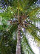 St Lucia palm tree on beach - stock photo