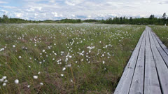 Long wooden planks road to the firest river among swamp, Karelia, Russia Stock Footage