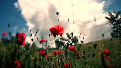 Poppies under the clouds. Stock Footage
