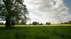 Beautiful tree english countryside field Stock Footage