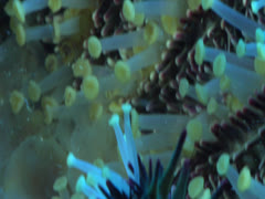 Underside of Sea Star Legs Stock Footage