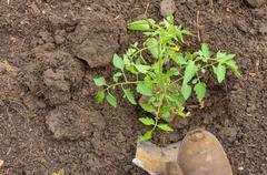 home vegetable gardening preparation - stock photo