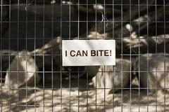 A sign saying I CAN BITE! on a cage Stock Photos
