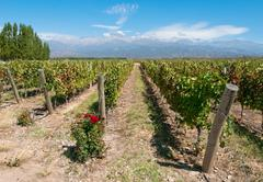 Vineyards of mendoza, argentina Stock Photos