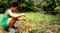 The boy eating litchi Stock Footage