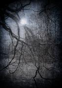 Grunge image of dark forest, perfect halloween background Stock Photos