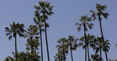 Ultra HD 4K Beverly Hills, Palm Trees, Santa Monica BLVD, Los Angeles, USA Stock Footage
