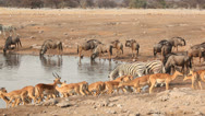 Stock Video Footage of Etosha waterhole