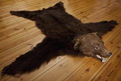 A bear skin rug on wooden floorboards Stock Photos
