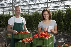 A woman and man standing behind crates of fresh tomatoes working in a greenhouse - stock photo