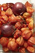 Stock Photo of Red Onions and Physalis alkekengi