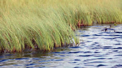 Green grass in water. Close up view Stock Footage