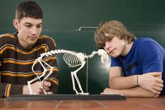 Two students looking at a cat skeleton in biology class - stock photo