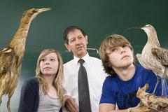 Students learning about a Bittern, Botaurus stellaris, and a Curlew, Numenius Stock Photos