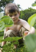 A boy picking a strawberry in a garden - stock photo