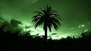 Stock Video Footage of Palm tree time lapse