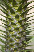 Yksityiskohta piikki varren kasvien Kuvituskuvat