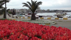 Tulip flowerbed at the seaside marina Stock Footage
