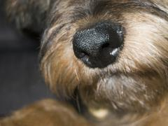 The snout of a dog Stock Photos