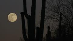 Moonrise Arizona Desert Landscape Time Lapse Stock Footage
