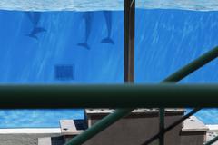Detail of dolphins in an aquarium Kuvituskuvat