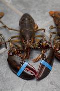 A live lobster on a tile floor Stock Photos