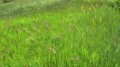 green wild grass motion of wind - stock footage