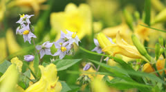 Bright Summer Flowers Stock Footage