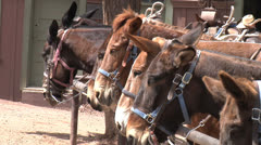 Grand Canyon National Park Mules in Coral 2 Stock Footage