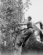 Man pruning tree Stock Photos