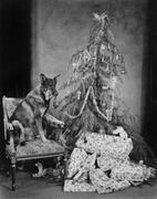 Dog with Christmas tree and presents - stock photo