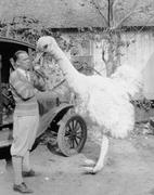 Man with large fake ostrich Stock Photos