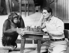 Man playing chess with monkey Stock Photos
