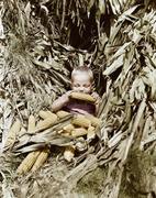 Boy eating a corn cob in a corn field - stock photo